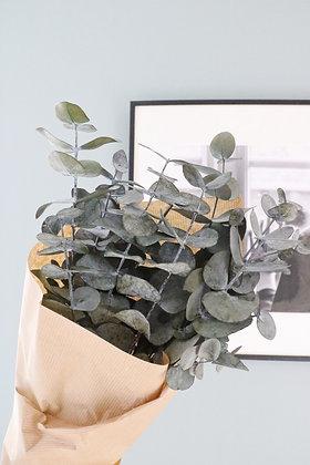 Botte d'Eucalyptus stabilisé