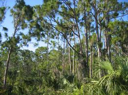 Pine Rockland Preserve