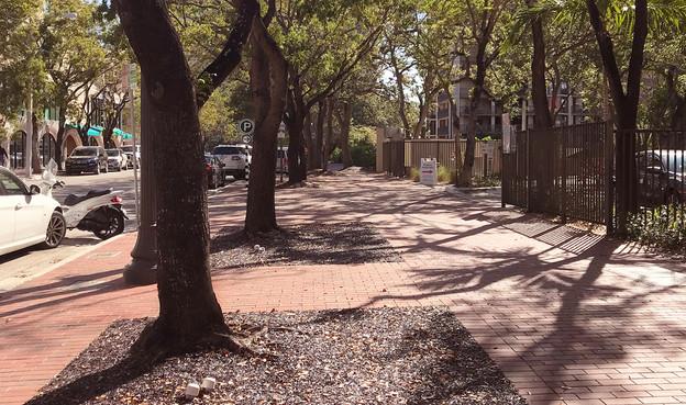 Finished sidewalks near large trees