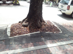 Before | Severe lift of sidewalks from large trees