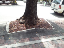 Before   Severe lift of sidewalks from large trees