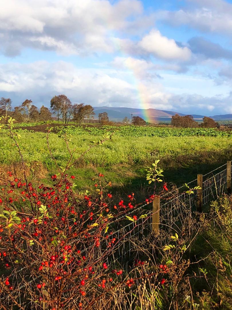 Autumn berries and rainbow
