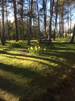Daffodils at Easter