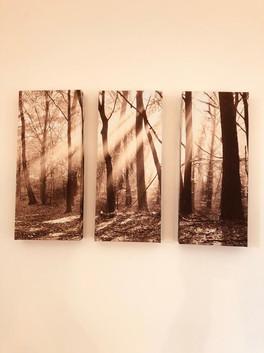 Print of Trees