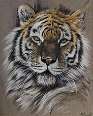 tigre abime.jpg