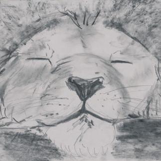 ER-cat-3.jpg