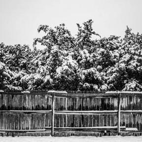 Spring Portfolio-21.jpg