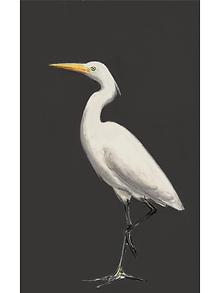 White egret 6.png