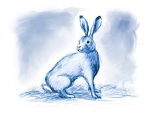 hare jpg.png
