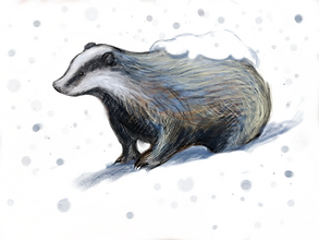 snow badger.PNG