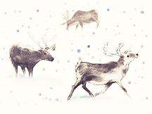 reindeer gold.PNG