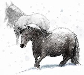 fell ponies snow.jpg