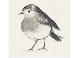 grey robin.PNG