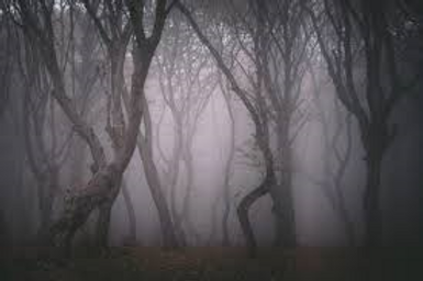 creepyforest.png