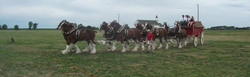 9_clydsdales_905_x_281.jpg