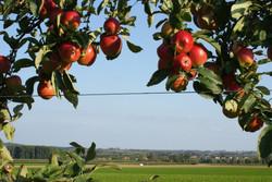 appelvieuw