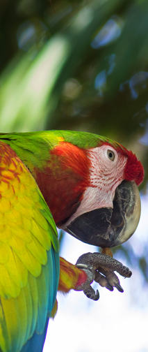 Hybrid macaw with enrichment