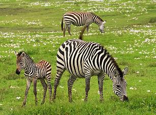 13D The Wilderness of Kenya & Tanzania