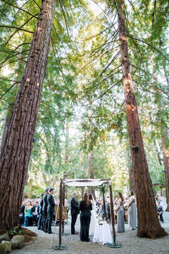 Redwood Forest Setting