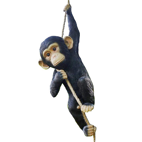 Chimp On A Rope