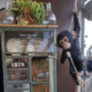 monkeywindow.jpg
