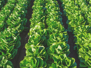 Arizona leafy green growers implement comprehensive water metrics