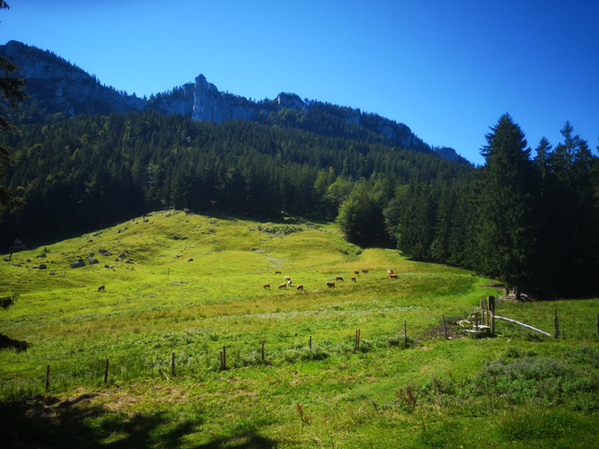 Sommer im Chiemgau