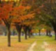 Fall in Ann Arbor