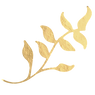 4771604-gold-leaf-png-images-vector-and-