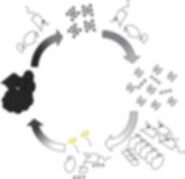 オリジナルバクテリアの水質浄化サイクルの略図