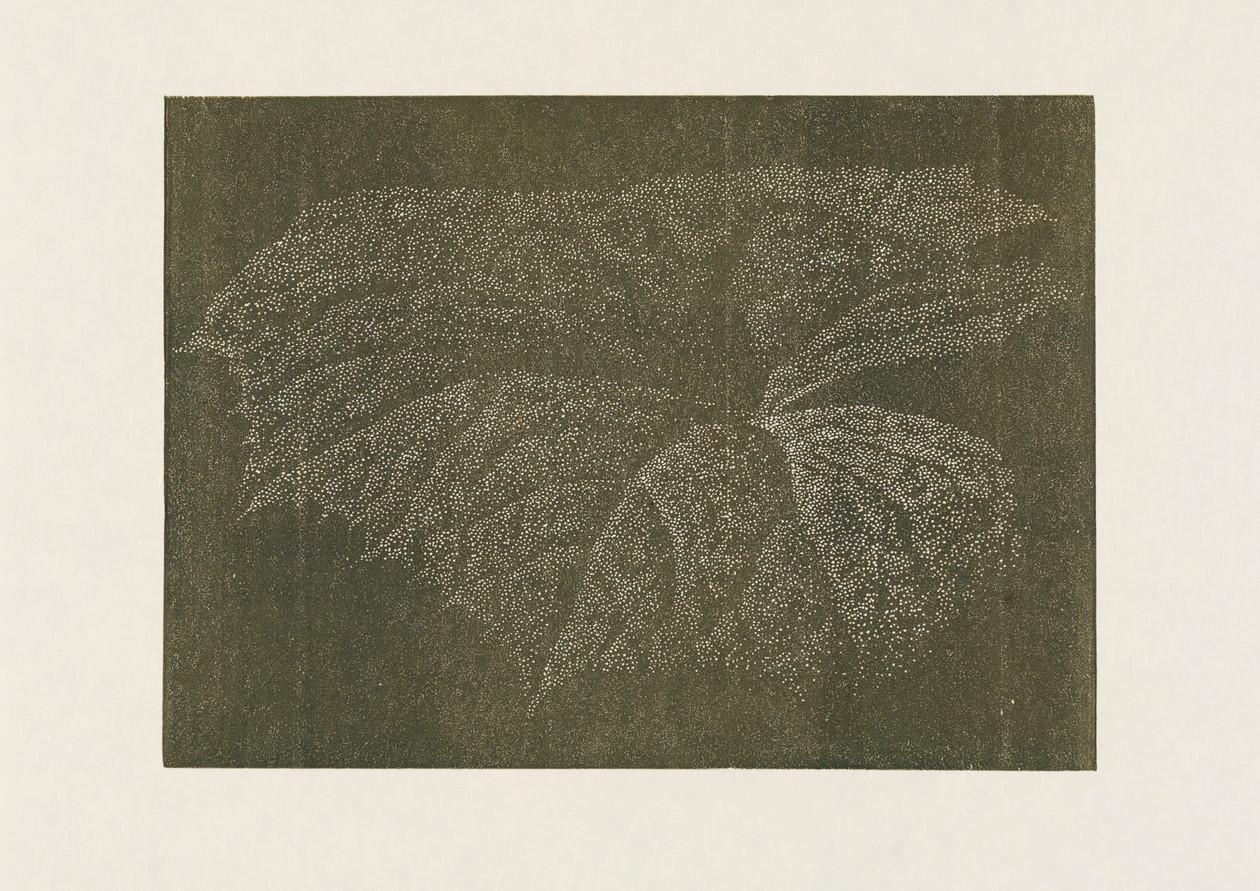 «Pestwurz» von Franz Gertsch