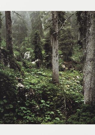 «Wald» von Peter Fischli und David Weiss