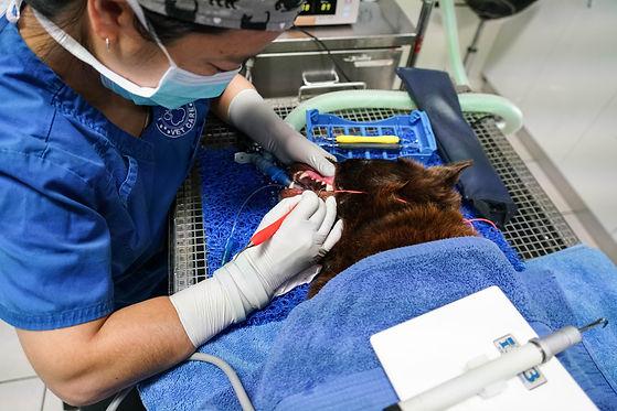 Dentals 6.12.19-19.jpg