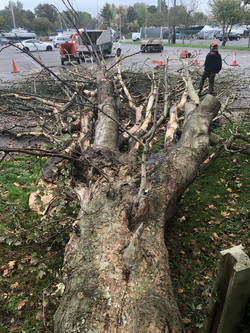 Lloyds Tree 10