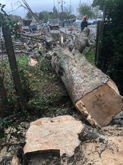 Lloyds Tree 9
