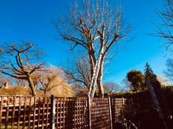 Lloyds Tree 2