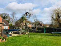 Lloyds Tree 1