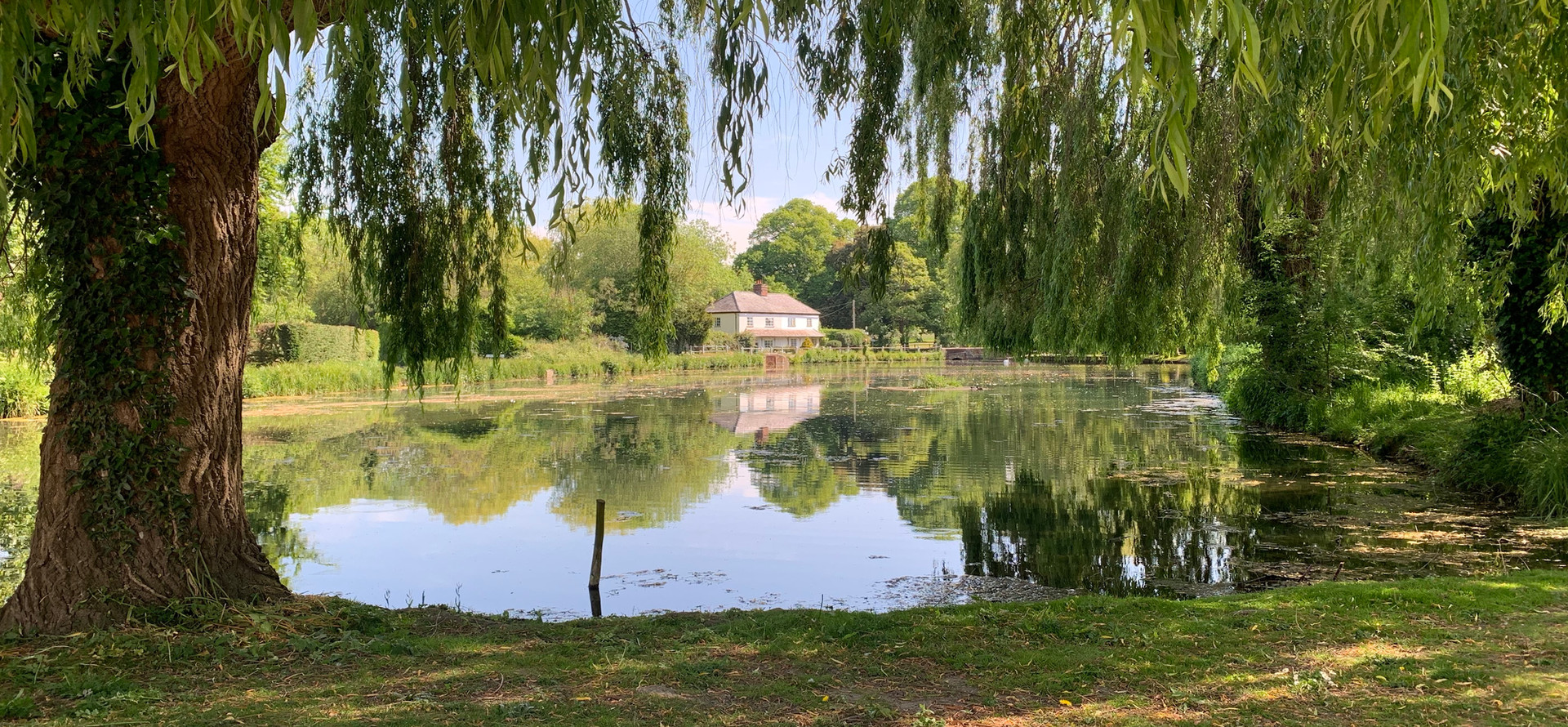 The Mill Pond at West Ashling looking through weeping willow tree