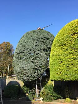 Lloyds Tree 8