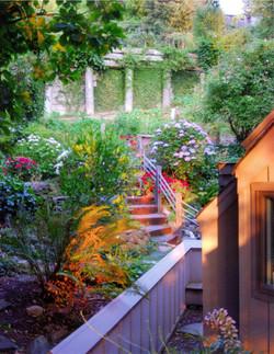 Mill Valley Hillside Garden