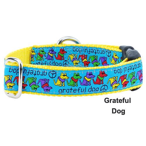 Teddy the Dog Collar