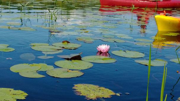 wittswamp_kelly_flowerboats_august2013.j