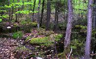mauricegbenson_forest2.jpg