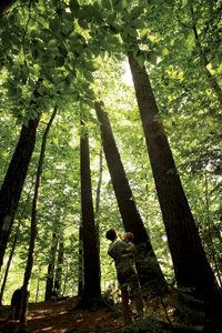 rec_trees.jpg