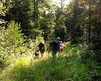 Randonneurs dans le bois de Noyes