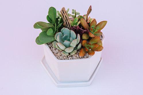 Matte Hex Pot Succulent Arrangement