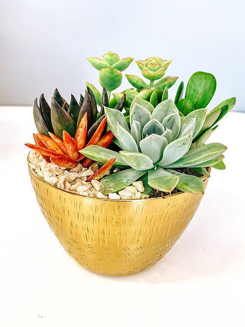 Gold Jema Bowl Succulent Arrangement
