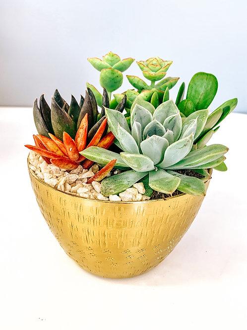 Gold Jema Bowl Succulent Arrangement