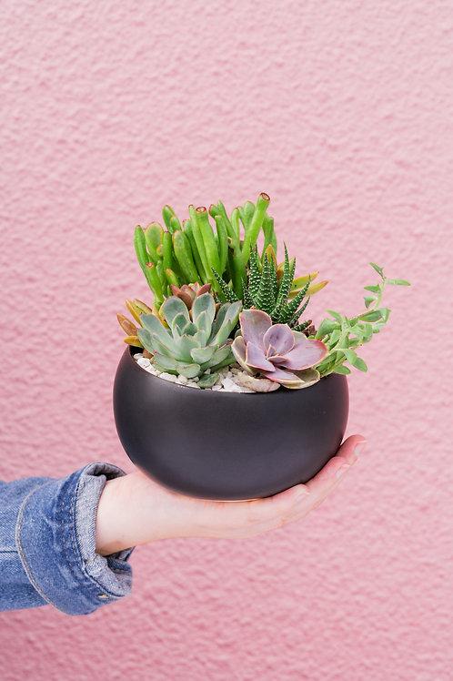 Asymmetrical Modern Bowl Succulent Arrangement
