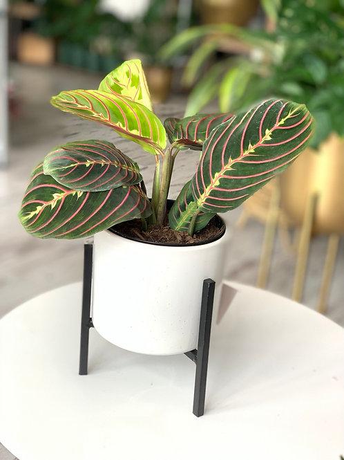 "Modern Plant+Pot+Stand (4"")"